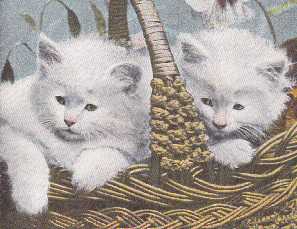Persian Kittens- 1900s Antique Postcard- White Lilies- White Cats in Basket- Robbins Brothers- Edwardian Cats- Unused