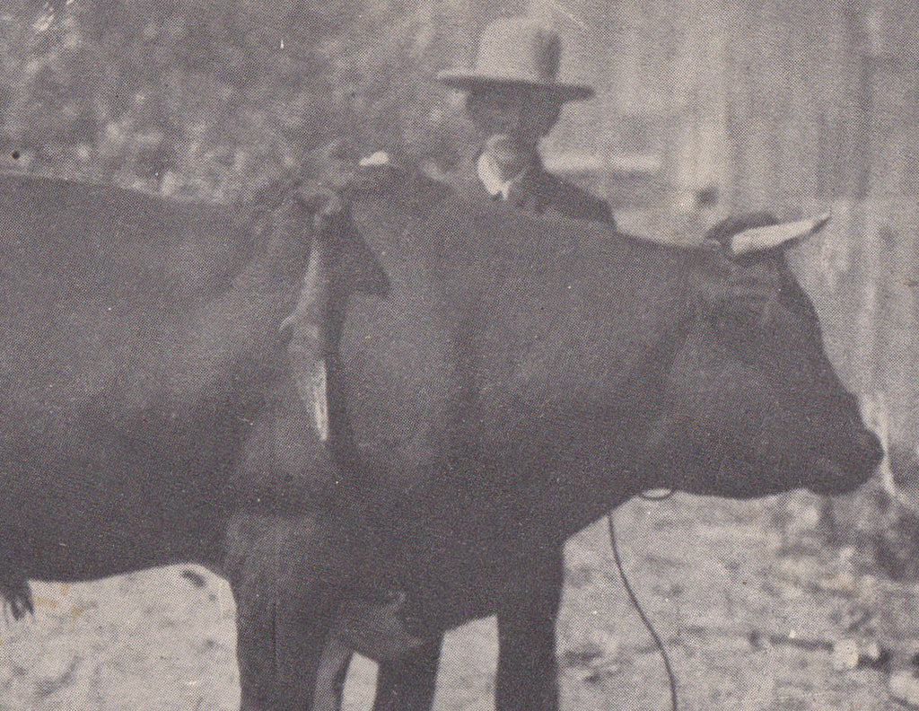 Billy the Bull- 1910s Antique Postcard- Freak Bull- E J Seymour- Touring With a Six-Legged Calf- Oddity