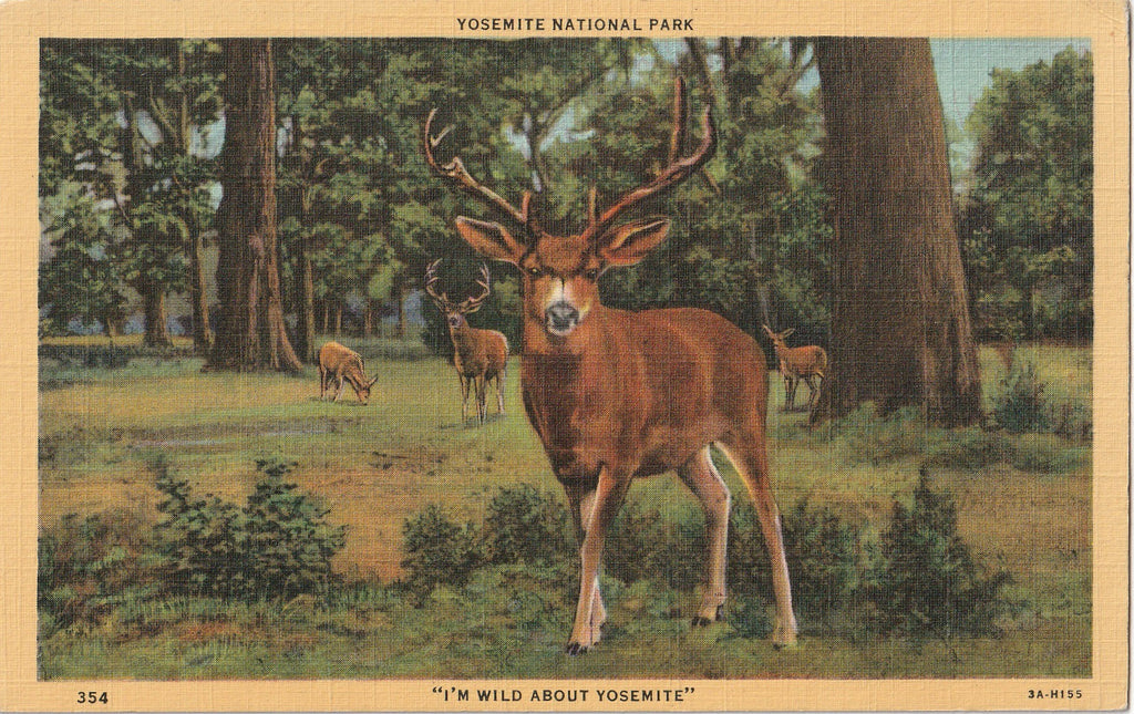 I'm Wild About Yosemite Deer Postcard