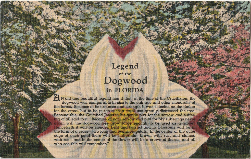 Legend of the Dogwood in Florida Postcard