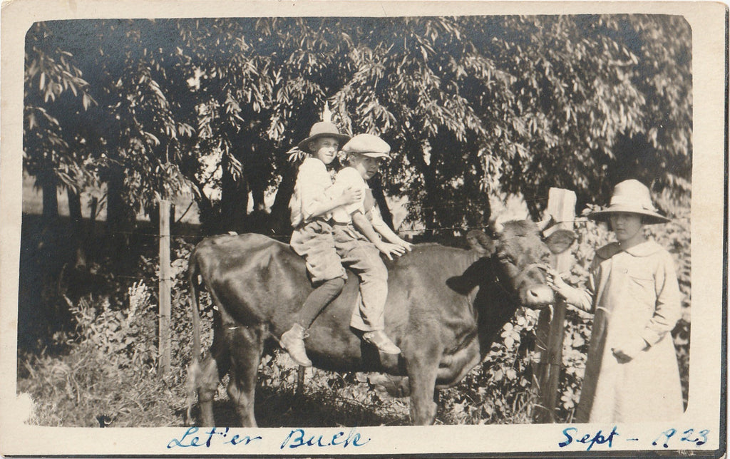 Let'er Buck Riding the Family Cow RPPC