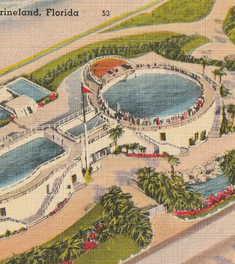 Marine Studios Marineland FL Vintage Postcard Close Up
