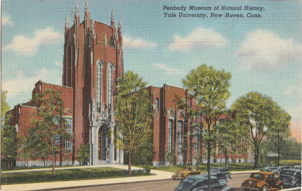 Peabody Museum of Natural History New Haven Postcard