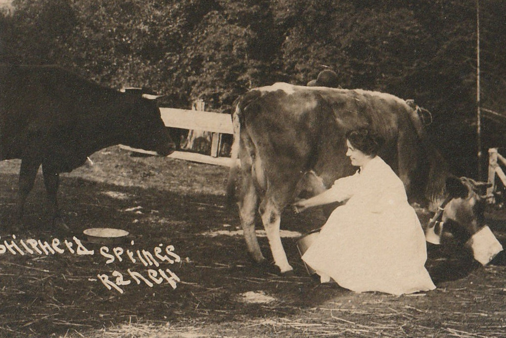 Shipherd Springs Ranch RPPC Antique Photo Close Up 2