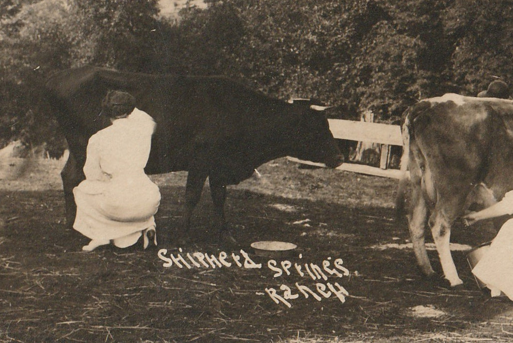 Shipherd Springs Ranch RPPC Antique Photo Close Up 3