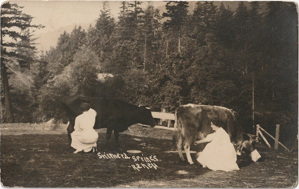 Shipherd Springs Ranch RPPC Antique Photo