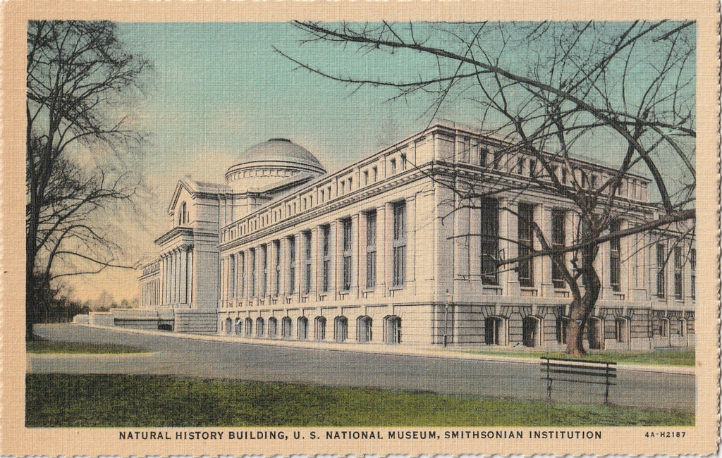 Smithsonian Natural History Building Washington DC Postcard