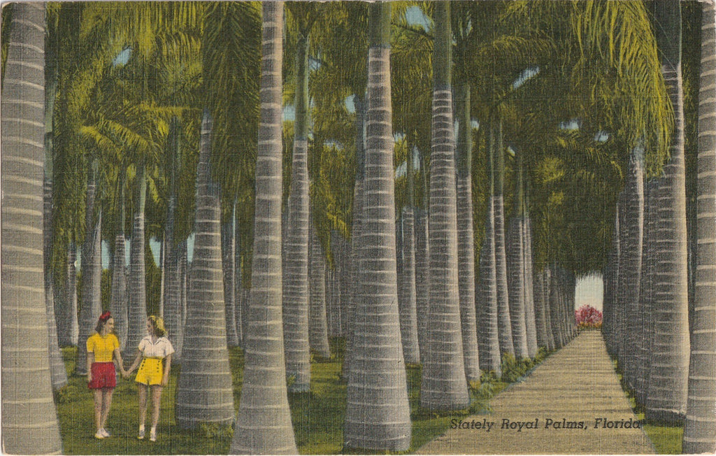 Statley Royal Palms Florida Vintage Postcard