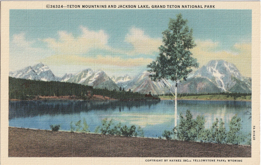 Teton Mountains Jackson Lake Yellowstone Postcard