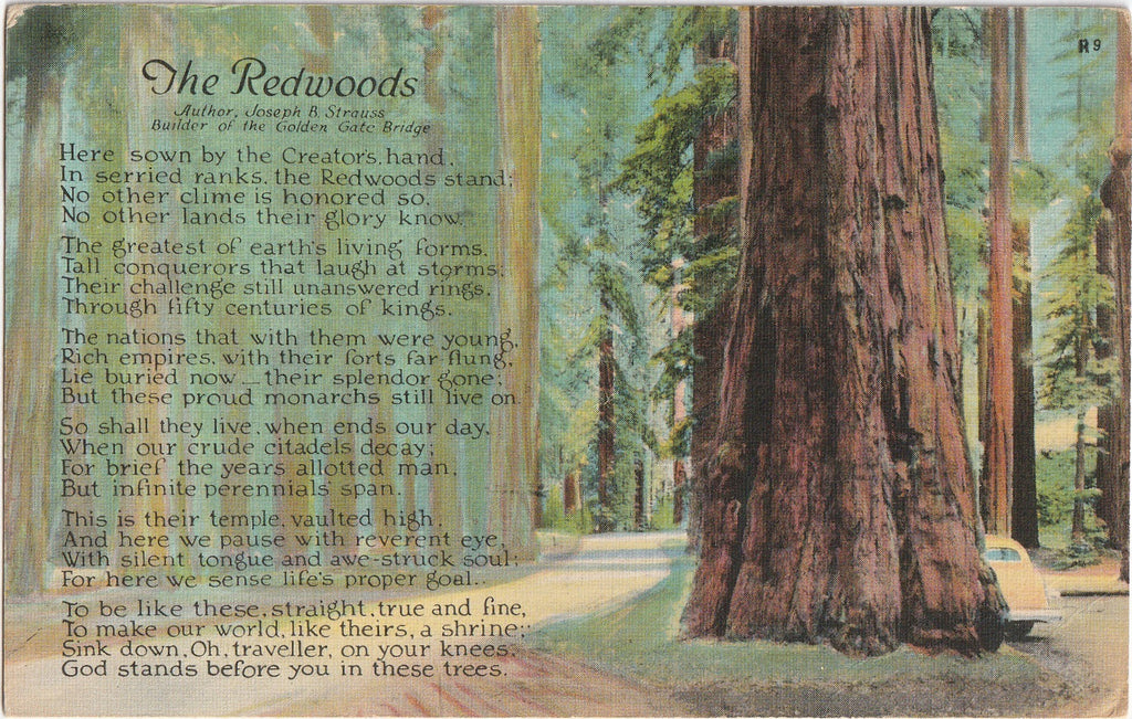 The Redwoods - Joseph B. Strauss Poem - Postcard, c. 1940s