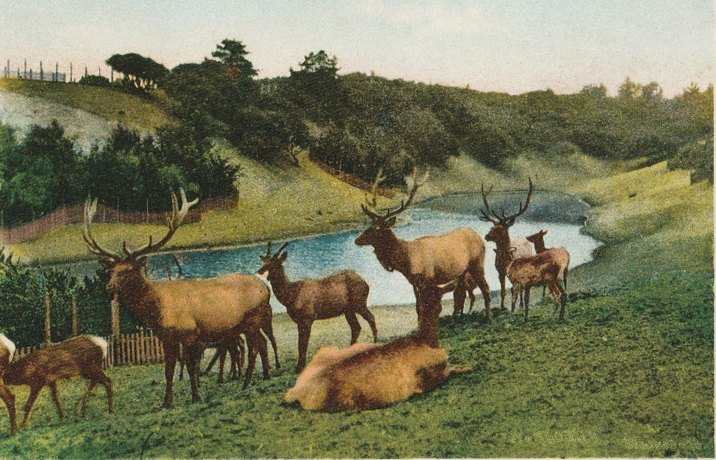 The Elks Golden Gate Park San Francisco California Antique Postcard Close Up