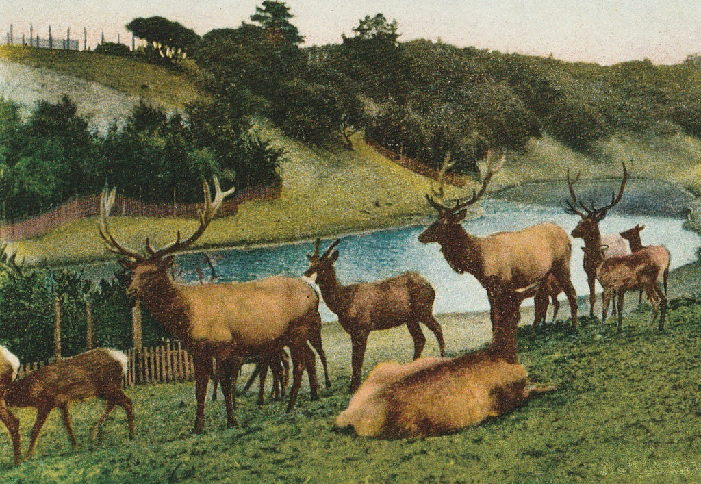 The Elks Golden Gate Park San Francisco California Antique Postcard Close Up 2