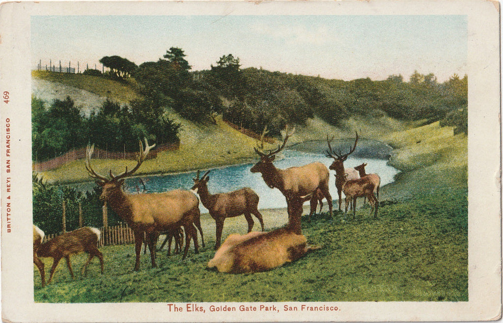 The Elks Golden Gate Park San Francisco California Antique Postcard
