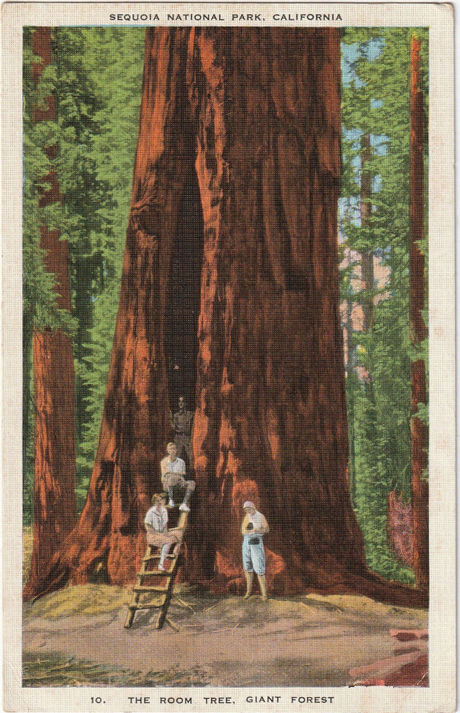 The Room Tree Sequoia National Park Vintage Postcard