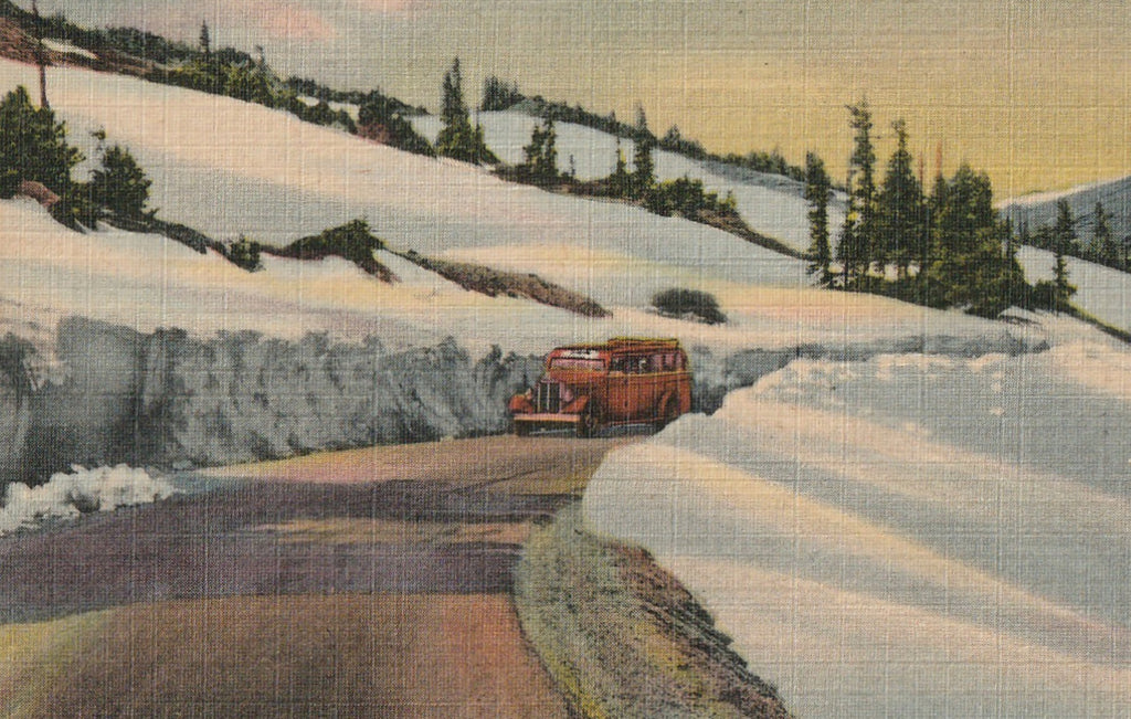 Trail Ridge Road Rocky Mountain National Park Vintage Postcard Close Up