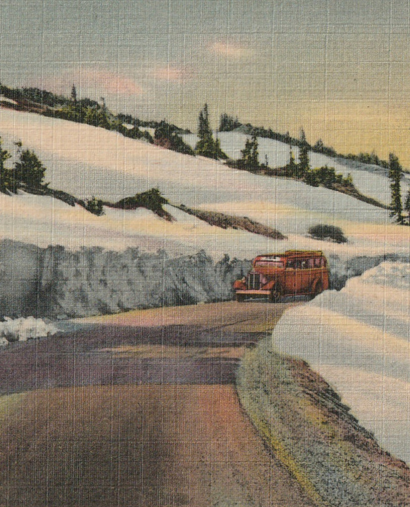 Trail Ridge Road Rocky Mountain National Park Vintage Postcard Close Up 2