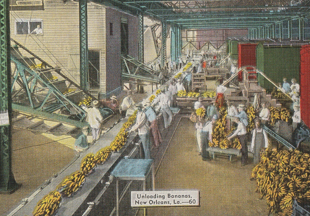 Unloading Bananas New Orleans Vintage Postcard Close Up