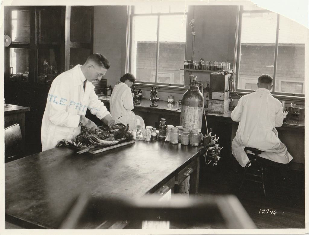Veterinary Medicine Laboratory - H. C. Kernkamp - Photo, c. 1923