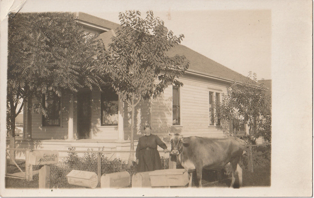 Waiting for Mail Dairy Cow Salem Antique Photo RPPC