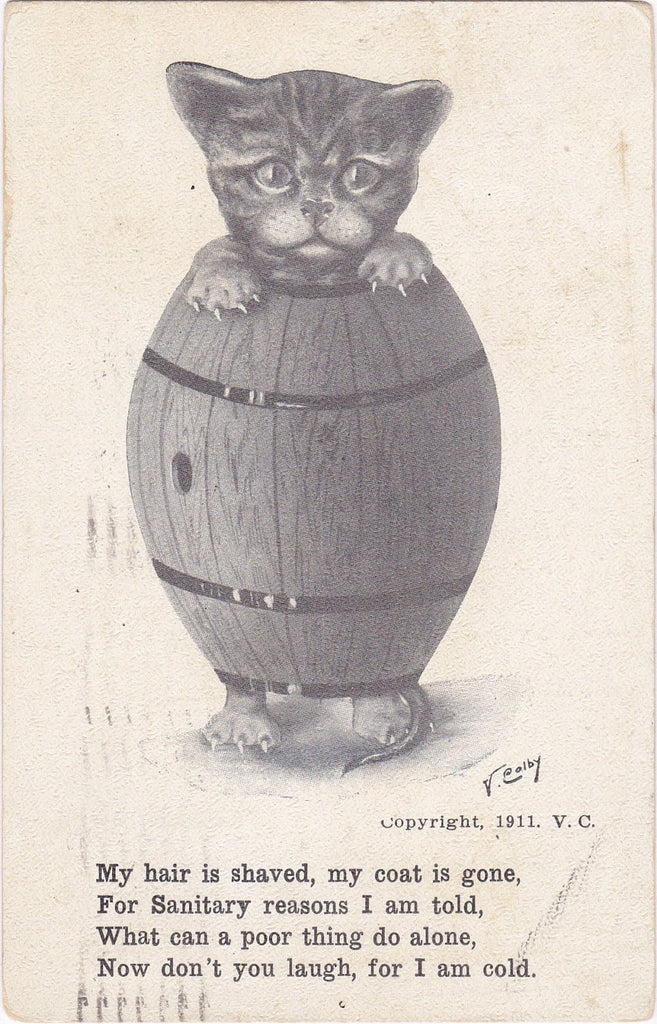 Poor Thing- 1910s Antique Postcard- Shaved Cat Wearing Barrel- Cat with Fleas- Edwardian Art Comic- V Colby- Artist Signed- Muir & Co.- Used