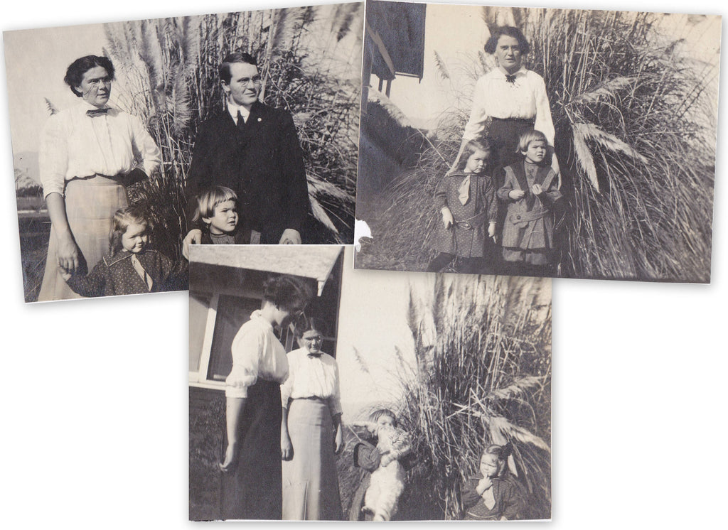 Edwardian Family Snapshots- 1910s Antique Photographs- SET of 3- Tabby Cat- Fountain Grass- Ornamental Tall Grass- Found Photos- Vernacular
