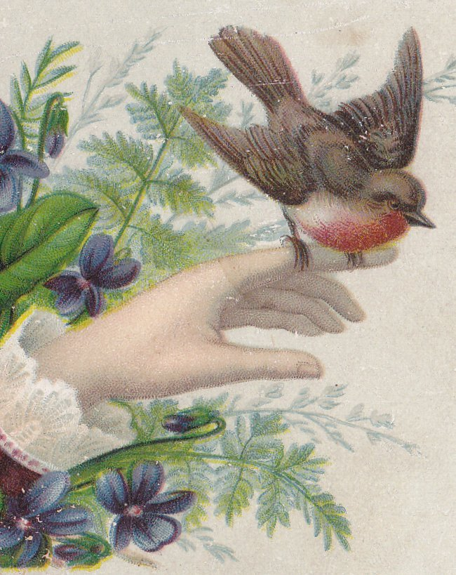 Little Bird Told Me- 1800s Antique Trade Card- Victorian Lithograph- Robin Redbreast- Violets Bouquet- Bird on Finger- Ladies Hand- Flowers