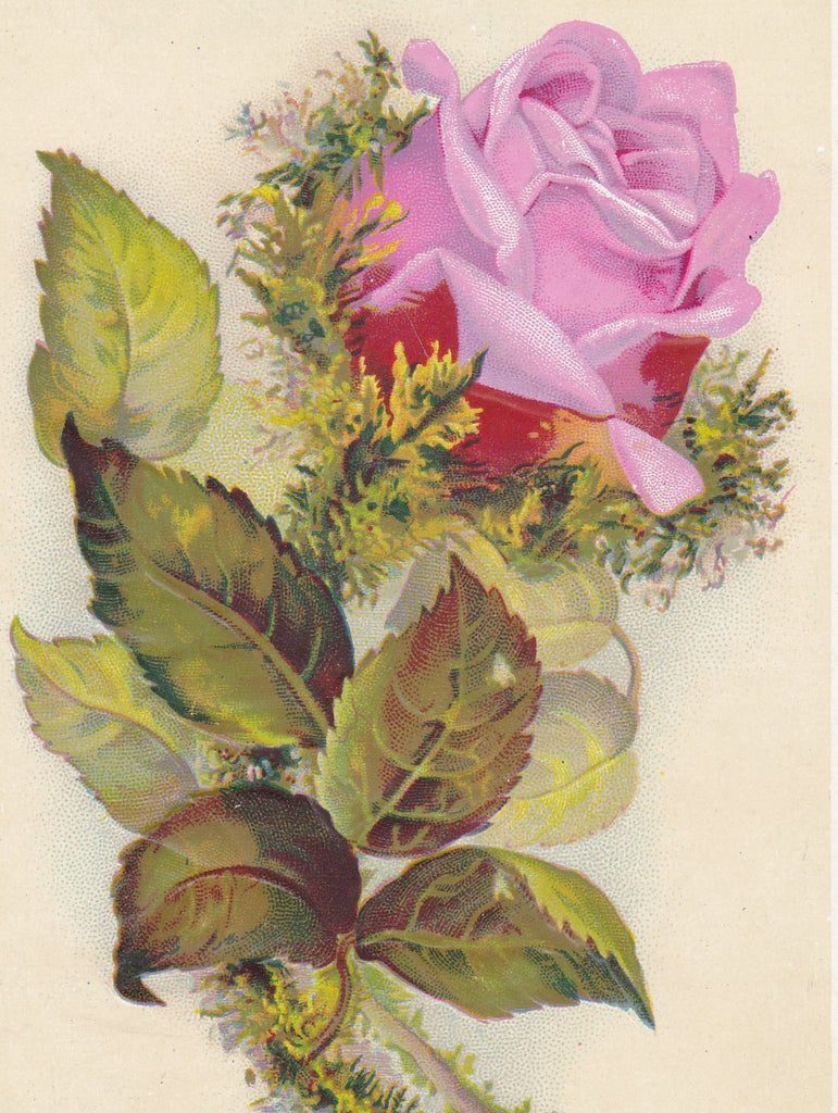 Forgiveness of Sins- 1800s Antique Trade Card- Pink Rose- Lithograph Print- Bible Quote- Colossians I:14- Victorian Flower- Paper Ephemera
