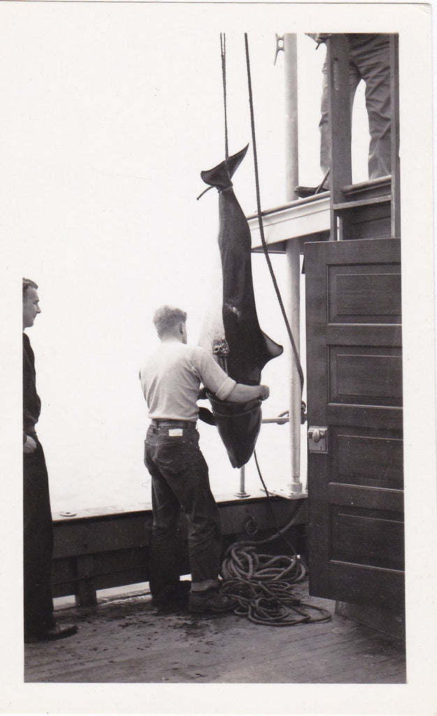 Dolphin Hunting- 1930s Vintage Photograph- Bellingham, Washington- Endangered Animal- Dead Porpoise- Eyewitness History