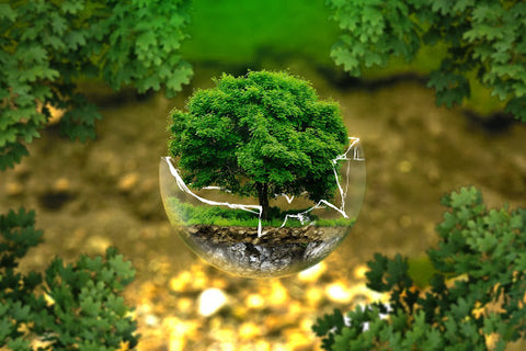 an image of a tree in a broken glass globe