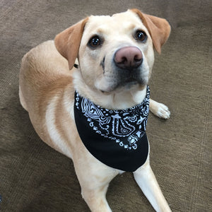 Tie-on Dog Bandana