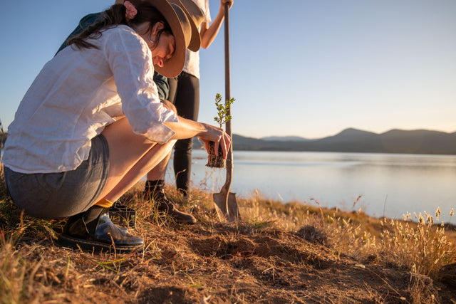 REWILD THE SNOWIES - PLANTING 6,000 TREES IN THE SNOWY MOUNTAINS