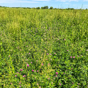 cover crops rotationally grazed to curb climate change