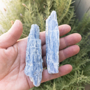 Blue Kyanite Blades - WHYTE QUARTZ