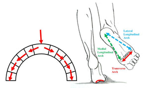 Structural Strength of the Foot