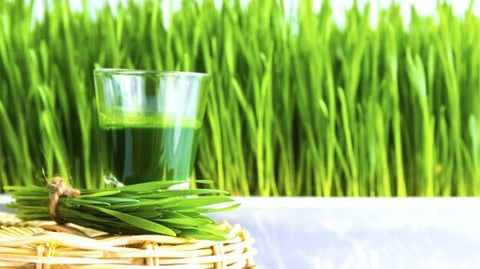wheatgrass raises vibrations