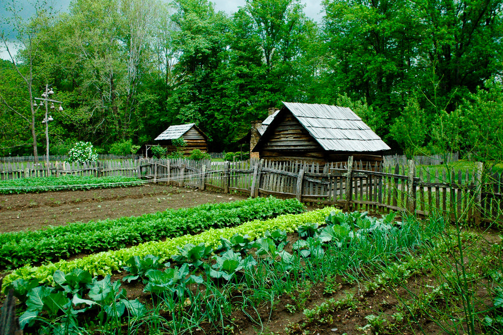 Planning a Beautiful Poatager or Kitchen Garden
