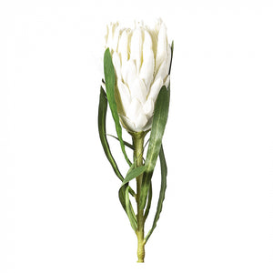 Queen Protea Stem - White