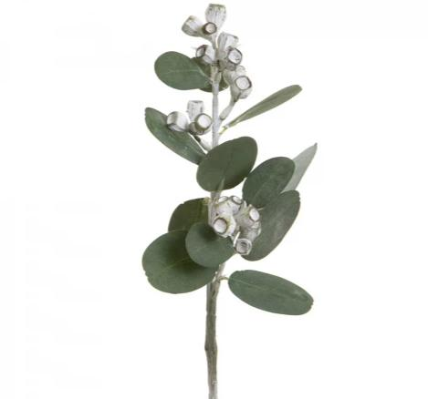 Eucalyptus with Gumnuts Spray