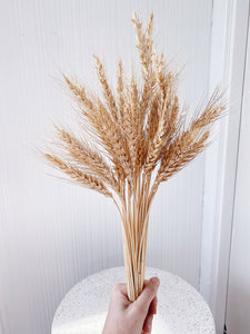 Dried Wheat Bush Bundle