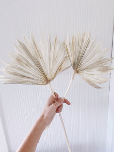 Dried Palm Fan