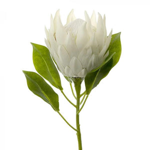 King Protea Stem - White