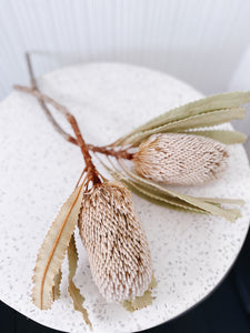 Dried Banksia Stems