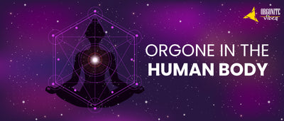 ORGONE IN THE HUMAN BODY