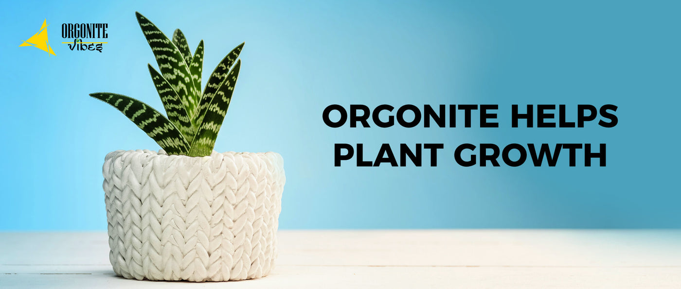 ORGONITE HELPS PLANT GROWTH