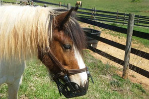 Why Do Farriers Recommend Grazing Muzzles for Their Equine Clients?