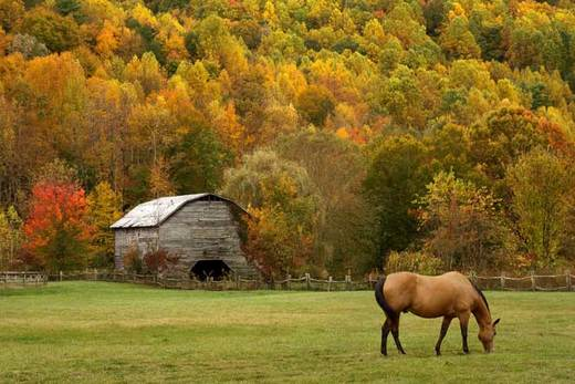 Fall Laminitis: The Danger Is Real