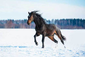 Preparing your horse for winter