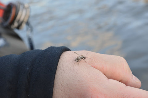 Housatonic River TMA Winter Stonefly - Anglers Den