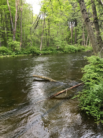 EB Croton - Phoebes Bend Looking Upstream