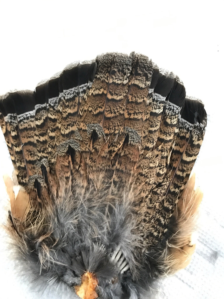 Ruffed Grouse Fan Tail (Red Phase)